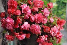 Jardin parfumé / Les plus belles plantes pour un jardin tout en parfum...