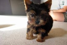 puppies, kittens, and babies / All things cute and make you want to hug them / by Chris