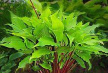 Plants &Nature