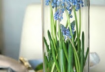 Decorating Ideas / by Angie Beal Hilton