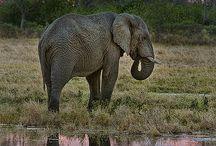 Mis Elefantes