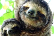 sloths :) / by Julie B