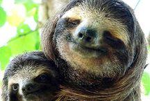 sloths :) / by Julie B