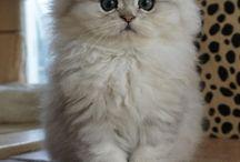 Cute cat ❤️