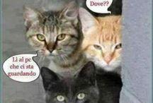 amici gatti