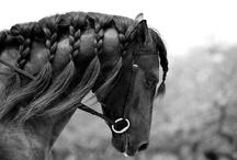 horse-sense