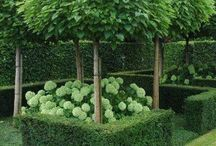 дизайн растения снаружи