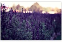 Flowers, Herbs & Plants