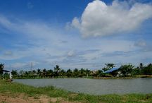 Thailand fishing lakes and rivers / A selection of Fishsiam's Thailand fishing venues from commercial fishing ponds to wild tidal rivers and reservoirs