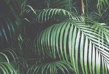 PALM / Palm & Palm Trees