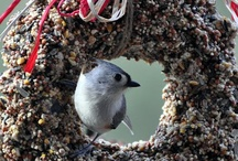 Bird Houses & Feeders | Colorado Alpines and Wildflower Farm / What is a garden without the tweet-tweet of birds? Great ideas for attracting and enjoying birds in your garden.