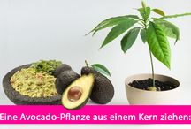 Selbst gepflanzt