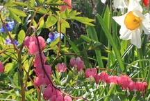 flowers / by Sharon Kaye Defore Lowe