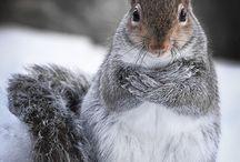 veverițe și arici