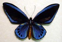Motýle vzácne