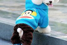 Dogs / Fashion