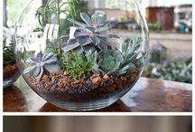 Terrarium & plants
