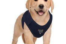 For the Dogs / WVU gear for a Mountaineer's best friend. Get your pets ready for the next tailgate or game watch with these gold and blue accessories. / by WVU - West Virginia University