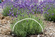 お花の手入れ(植物)