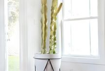 INTERIORS | Cactus in interior