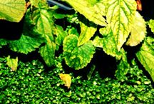 Green / 植物たち