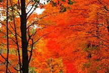 Fall season-My favorite time of year! / by Jeanne Peloquin