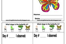 Butterflies / by Dustee Doering
