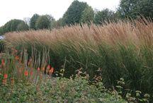 Modern grasses / Grasses for a modern look in the garden