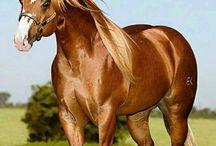 cavalos ❤