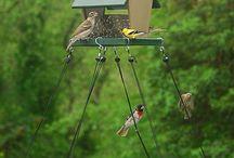 Bird feeder trays