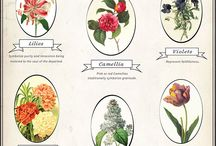 Flower meanings