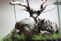 Aquarium ideas / by Meike from Bull Design