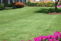 Grass Maintenance / Grass Maintenance at your garden to make lovely place for hangout with family and with loved ones..