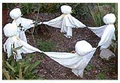 Yard Art (Halloween) / by Sandra Poag