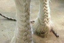 Paarden Vlechten