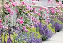 Fara tipy - zahrada