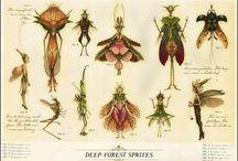 Fairys mm