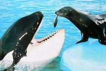 animais aquaticos