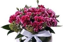 çorlu çiçek siparişi / Çorlu çiçek siparişi sayfasına hoş geldiniz. 29 TL'den başlayan fiyatlar ile Çorlu çiçek siparişi verebileceğiniz çiçekçi .  Çorlu daki sevdiklerinize sitemizden mis kokulu lilyum saksı çiçekleri orkideler ve gülleri tek bir tık ile çiçek siparişi verebilirsiniz. Çorlu çiçek siparişi vermek bizimle çok kolay ve ekonomik  http://www.cicekvitrini.com/cicekler/corlu-cicek-siparisi
