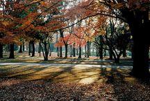 T o k y o / / S h i b u y a / 渋谷区 / Yoyogi Park / 代々木公園 /