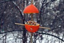 DIY orange bird feeder / karmnik z pomarańczy