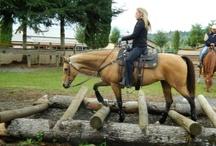 Horse - Arena and Pasture Ideas