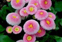Kukkia / *