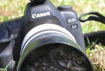 Unique of Lens
