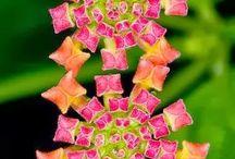 i love flowers / by Judy Creel
