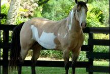 Horse Colours