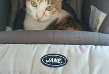 Nina / Cat pictures