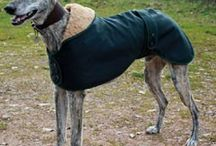 Greyhound love and diy doggy ideas