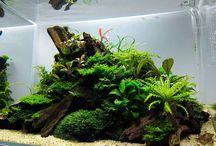 Aquarium Beta Males & landscap.