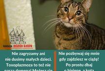Myths about the cats / myths about the cats  http://miastokotow.pl/